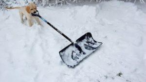 Columbus Ohio Home Inspectors Dog Shovels Snow