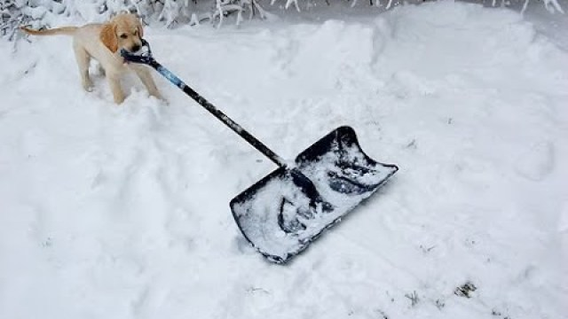 How NOT to shovel snow